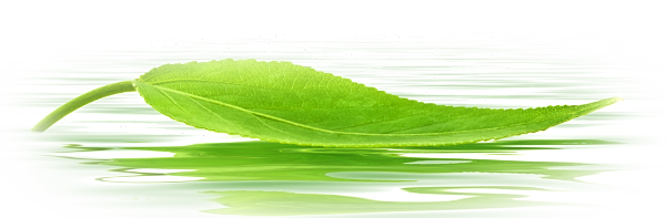 Green Leaf on Water